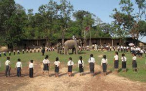 Actividades con el elefante