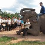 Leer con los elefantes