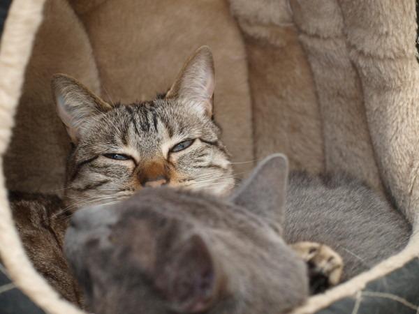 Los gatos, los otros bibliotecarios