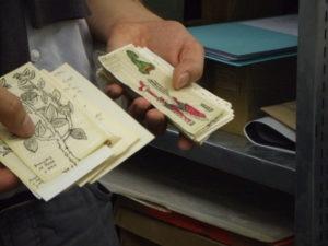 Colección de láminas (Instituto Iberoamericano)