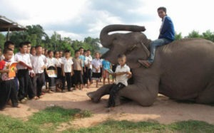 Leer con los elefantes en Laos